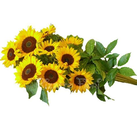 fiori a gambo lungo mazzo lungo di girasoli consegna fiori lecce bouquets