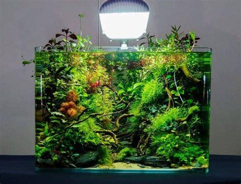 freshwater aquascape ideas amazing aquascape freshwater gallery ideas 17 decomg