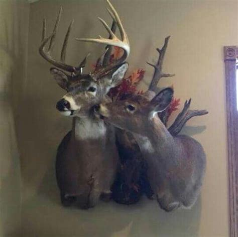 Whitetail Deer Home Decor 25 best ideas about deer mounts on pinterest deer mount