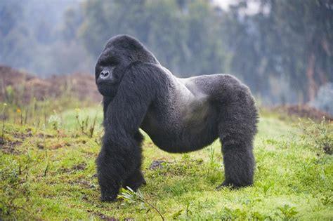 extinct breeds endangered species day 17 animals on verge of going extinct