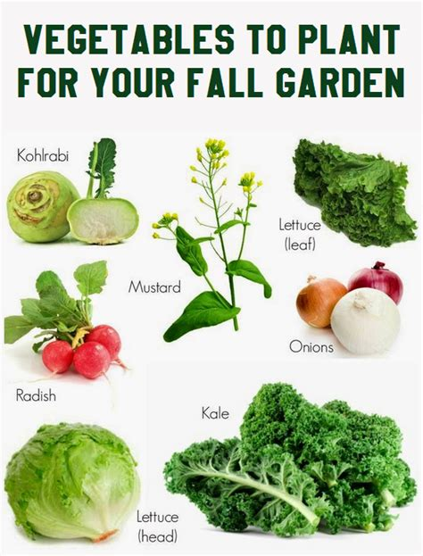 vegetables to plant for your fall garden vegetable - What Do You Plant In A Fall Garden