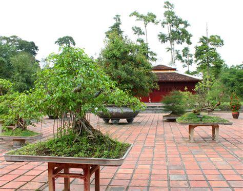 garten bonsai mit bonsai den garten dekorieren