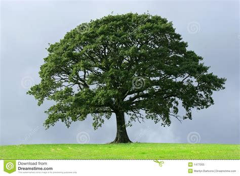 test psicologico albero test psicologico dell albero