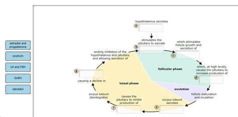 the flowchart below describes the events of the ovarian cycle solved part b hormonal of the ovarian cycle in