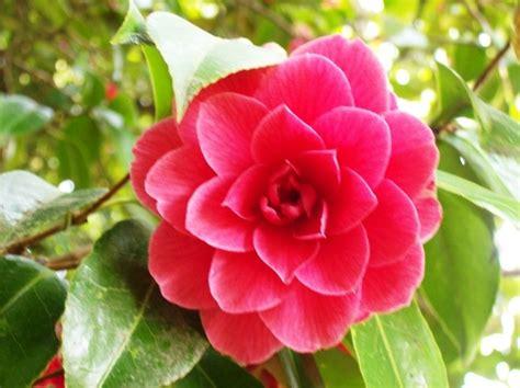 camila flowers pinterest