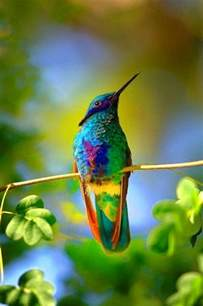hummingbird colors colorful hummingbird some where the rainbow