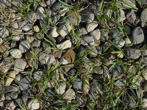 ghiaia texture free photo gravel texture grass rocks free image on