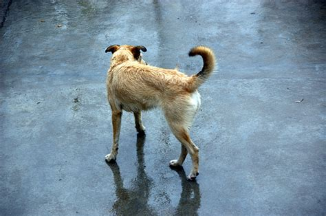 why do dogs run away stop your from running away the obedience academy