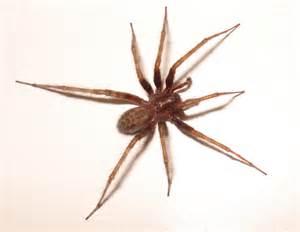 La Spider Anticimex Eloigner Les Araign 233 Es