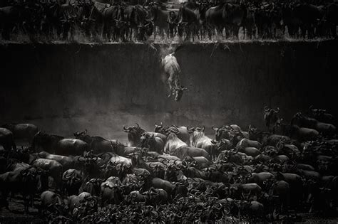 contest 2014 winners national geographic photo contest 2014