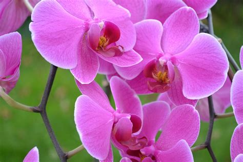 imagenes de flores hermosas orquideas free photo orchids flowers pink close up free image