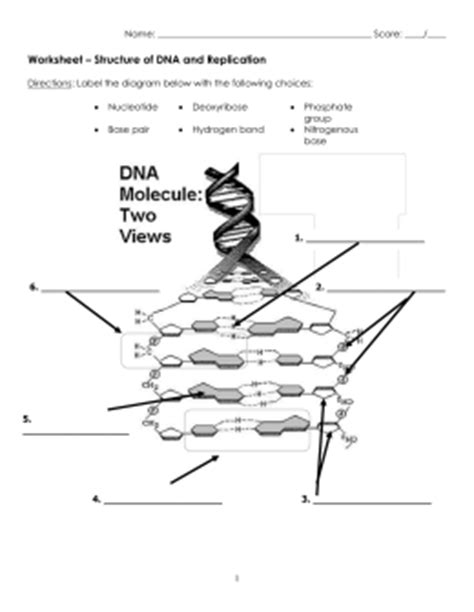 12 2 the structure of dna answers vocabulary quiz key terms