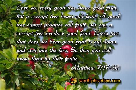 a tree by the fruit it bears be fruitful in spite of your circumstances worthy