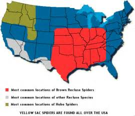 black widow california map brown recluse aid kit spider information