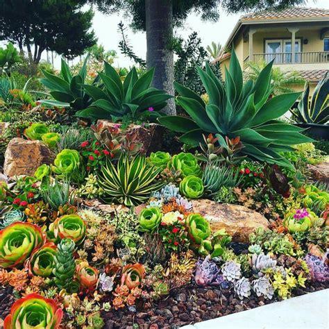 best 25 succulent rock garden ideas only on design 32