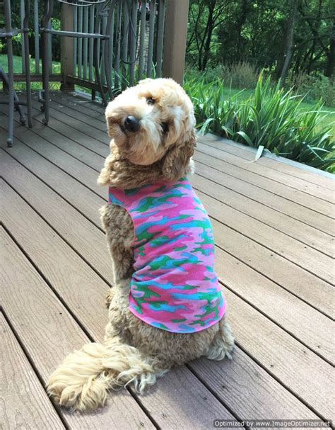 sassy puppy buy custom clothes pet garments in america sassy fashions