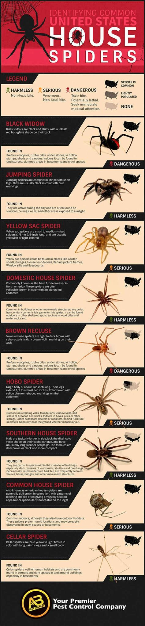 8 Ways To Identify Toxic by How To Identify Common Poisonous Spiders In Your Home