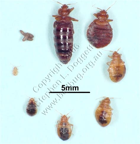 images of a bed bug nerd kills bed bugs scan phase
