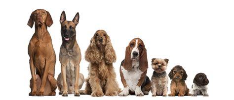 perros todas clases nombres de todas las razas de perros imagui