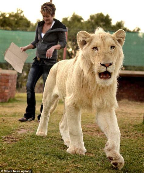 woman   lion   pet   house information nigeria