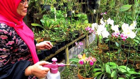 Pupuk Bunga Gaviota sobat yuk membuat taman kecil di rumah dengan vertikultur
