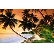 Beautiful Beach Palm Trees On Sunset  Wallpapers