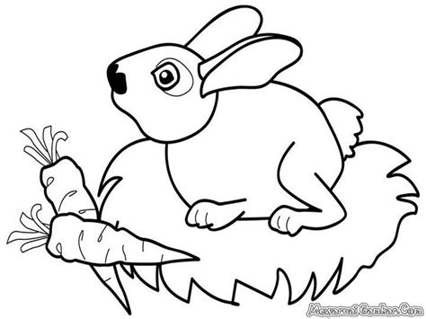 mewarnai 20 gambar kelinci mewarnai gambar