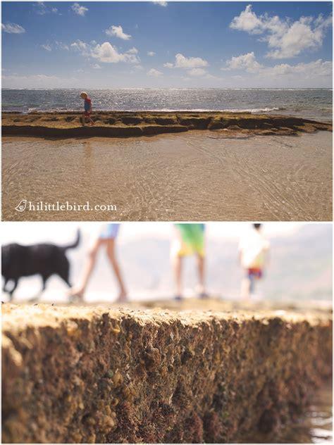 bathtub beach oahu bathtub beach in laie best baby beach on oahu 187 fun oahu
