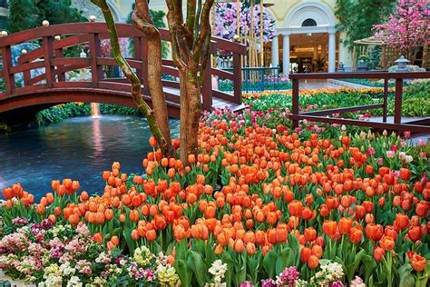 Bellagio Flower Garden Bellagio Celebrates Japanese Culture With Vibrant Conservatory Display
