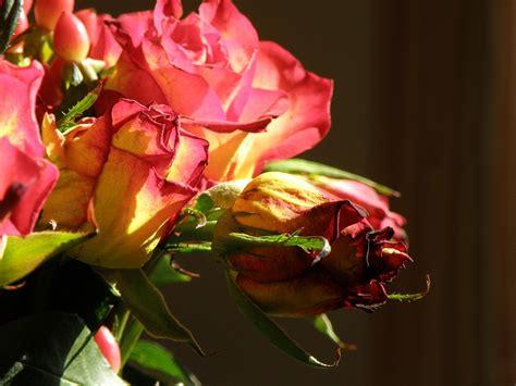 regalare un mazzo di fiori regalare mazzo di fiori pu 242 essere stalking soverato web