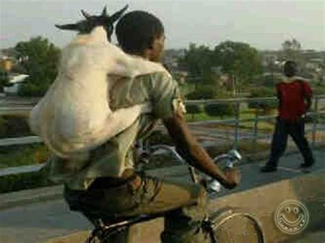 jual hewan qurban khusus kambing delivery service gambar bbm lucu