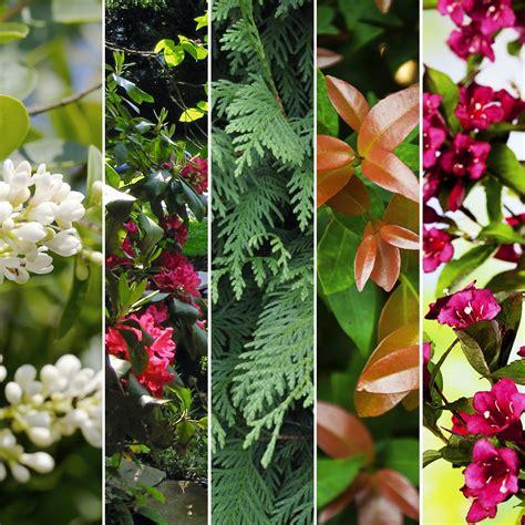Haie De Jardin Pousse Rapide by Kit De Haie Croissance Rapide Pour 10 M 10 Pots De 2 224 4