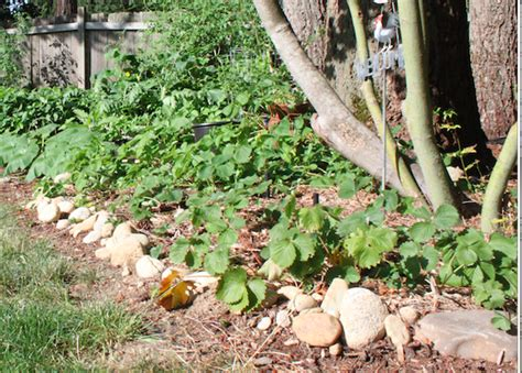 How To Build A Rock Garden Bed How To Build A Raised Garden Bed In 3 Steps