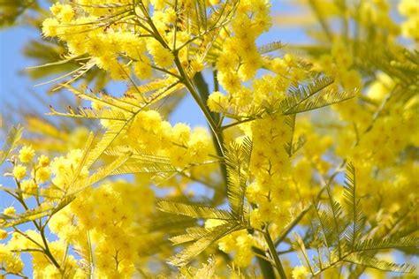 il significato dei fiori il significato dei fiori d it repubblica