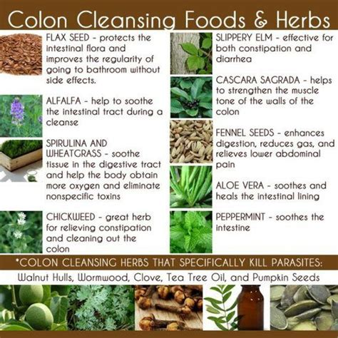 Colonic Irrigation Detox Diet by 17 Best Images About Colon Cleanse On Aloe