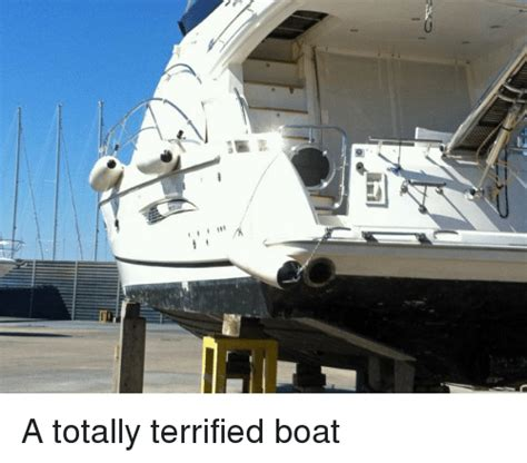 why i should not buy a boat search i should buy a boat cat memes on me me