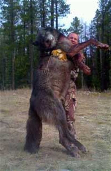 Jo In Pets To Shoot idaho mountain express fish and wolf photo a hoax