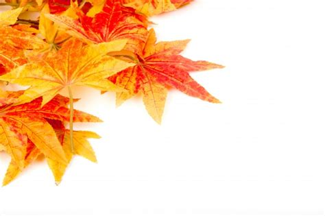 Dry Autumn Leaves On A White Background Photo Free Download Fall Leaves On White Background
