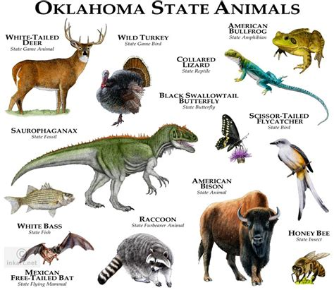 oklahoma state animal pokemon go search for tips