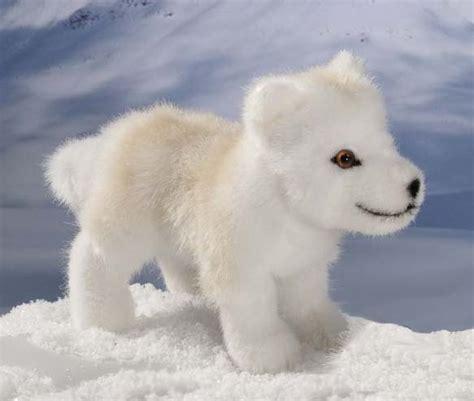 arctic wolf puppies arctic snow wolf puppies