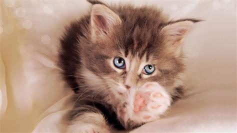 cat themed wallpaper cute cats cute cats 4