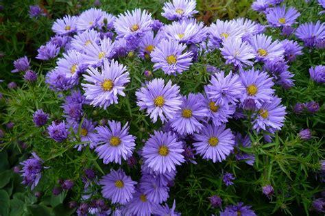 fall flowers for garden the most beautiful fall garden flowers