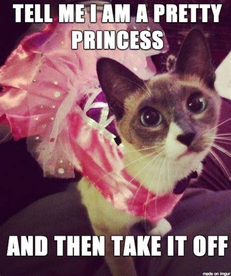 Halloween Cat Meme - 1000 images about cat memes on pinterest cat costumes