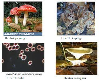 jamur ciri bentuk ukuran cara hidup habitat dan reproduksi biologi
