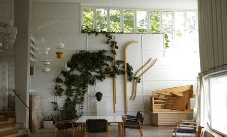 climbing vines indoors tips for growing common indoor how to grow indoor vines tips