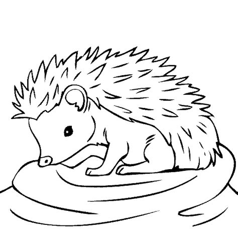 hedgehog coloring pages baby hedgehog coloring page these coloring pages are