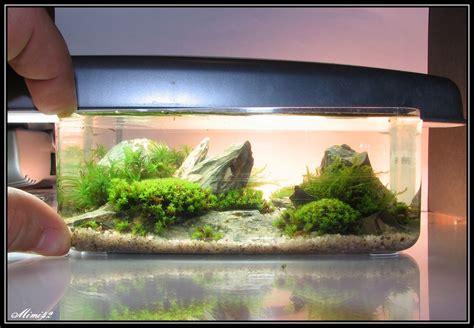 Aquascape Fish 171 K 233 Sapelorio Quezac 187 183 Crevettes Aquarium 42