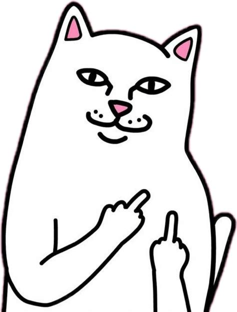 Middle Finger Cat Meme - cat middlefinger sticker by 一lily