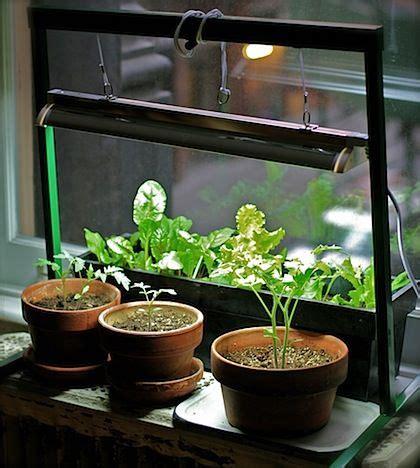 grow lights for indoor herb garden indoor indoor herbs and grow lights on pinterest