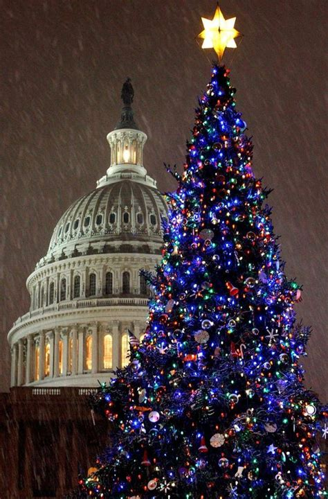 christmas trees washington and trees on pinterest